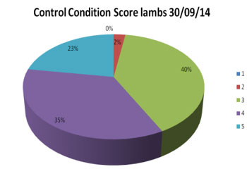 Condition Score : Control Group - September